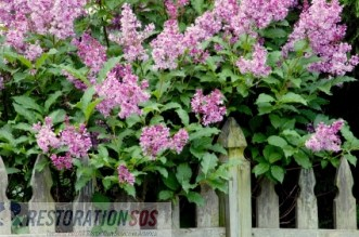 Promote fire safety in your backyard and outdoors area by planting fire resistant plants. Learn what fire resistant plants are and how to plant them in order to reduce fire hazards