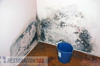 Learn how to utilize basic techniques to clean and disinfect mold affected items and surfaces in your home or business